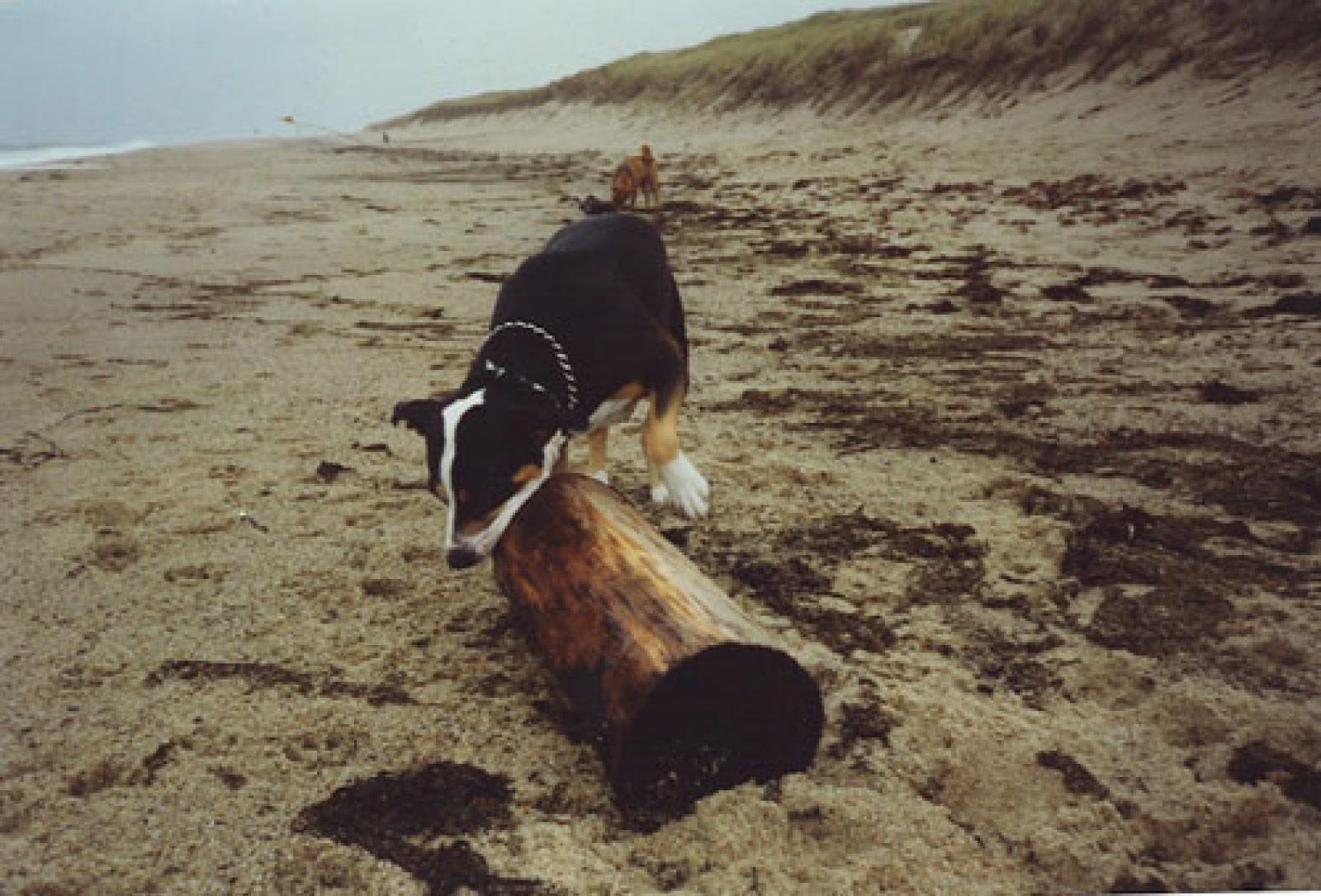 Rosie at Rockaway Beach