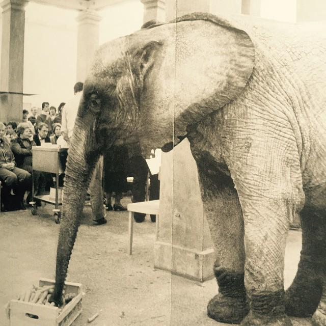 """""""We are of one kind"""", Concert at the Städelschule, Frankfurt, 1981 The public, people, and animals were listening to the same music and in the interval received the same snack: carrots, steamed in butter for the people, fresh for the elephant and his friends."""