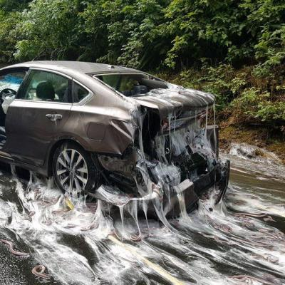 A trunk full of slime eels exploding on an Oregon highway