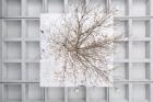 Henrik HÅKANSSON Inverted Tree (Reflected) (2018)