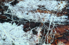 Most fungi live their lives as dynamic networks known as mycelium. This image shows the mycelium of a wood-rotting fungus exploring and consuming a log.