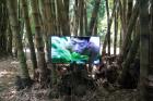 Zheng Bo, Pteridophilia, 2016 – Video, 37', installation view, Botanical Garden, Palermo