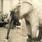 """We are of one kind"", Concert at the Städelschule, Frankfurt, 1981 The public, people, and animals were listening to the same music and in the interval received the same snack: carrots, steamed in butter for the people, fresh for the elephant and his friends."