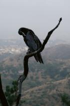 Lynchian Raven in June Gloom, Los Angeles, 2019