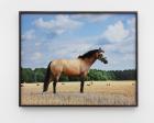 Megan Francis Sullivan, Marie 148 , 2014, c-print, 50 x 62.5 cm; Photo: Renke Klaproth
